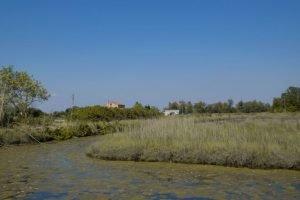 Acqua salmastra all'isola delle Vignole