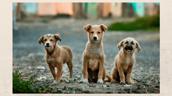Foto di 3 cani